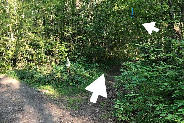 The single track entrance - start your timer! Look for the bike single track within 80m